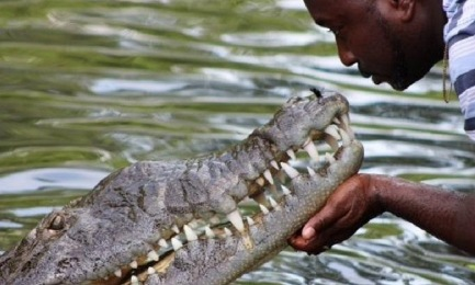 man kiss crocodile